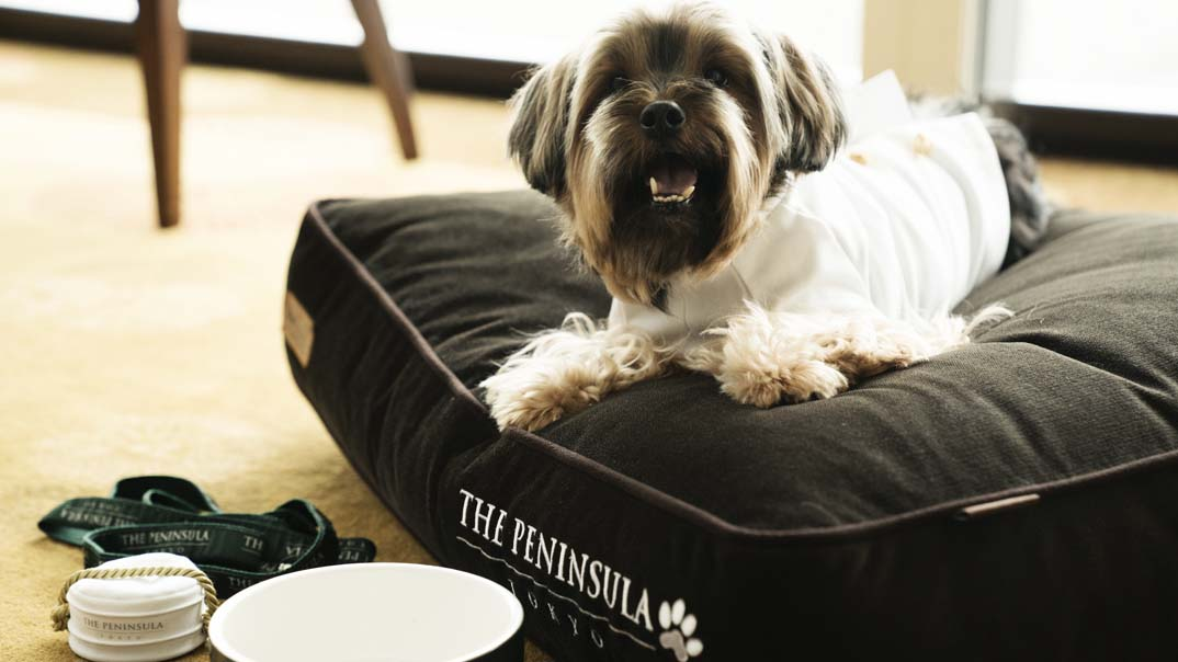 "The Peninsula takes ""pet friendly"" to a whole new level. The hotel's furry four-legged guests are pampered with special dog amenities from a specially designed menu to dog walking services by one of the hotel's friendly white-uniformed Peninsula Pages."